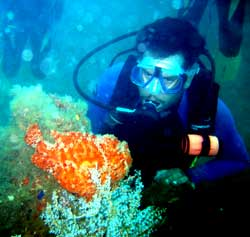 Scuba diver and a frogfish